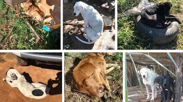 Animais foram flagrados em condições de mus tratos (Fotos: Cedidas/PM Ambiental ? Reprodução/Bastos Já).