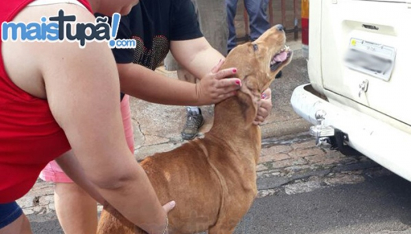 Um dos nove cães que estavam em condições de maus tratos, sendo resgatados por integrantes da ONG  de proteção animal (Foto: Diego Pereira/Mais Tupã!).
