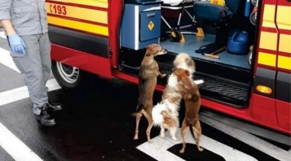 Depois que homem foi socorrido, seus cães queriam entrar na viatura para acompanhá-lo no resgate (Reprodução).