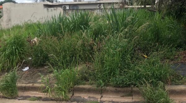 Prefeitura fez limpeza em terrenos e agora manda a conta para os proprietários, em Osvaldo Cruz (Foto: Assessoria de Imprensa).