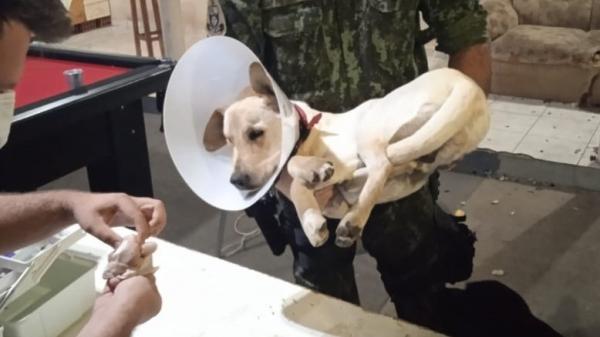 Cão castrado em uma república de estudantes, resgatado pela Polícia Ambiental (Divulgação/PM Ambiental).